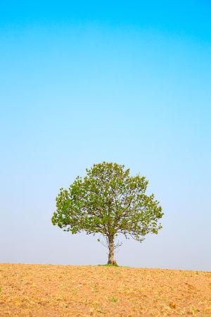slider-árbol